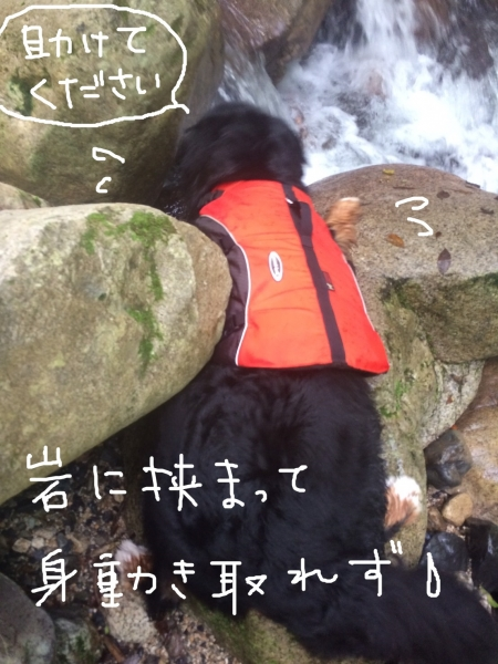 S__139714568.jpg
