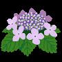 flower_gaku_ajisai (1)