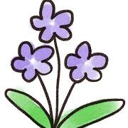 flower_sumire.jpg