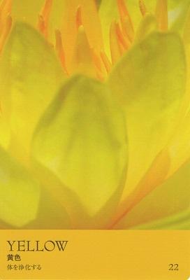 カラーカード:黄色