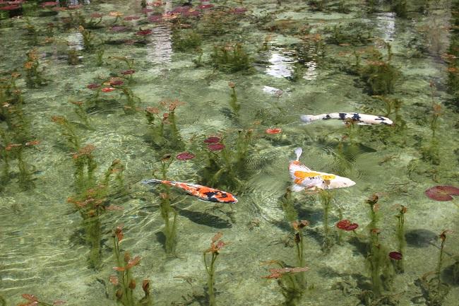 岐阜モネの池
