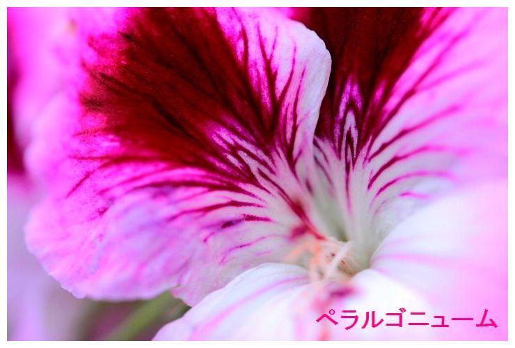 IMG_0441.jpg