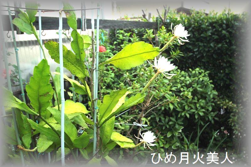 IMG_0726_R.jpg