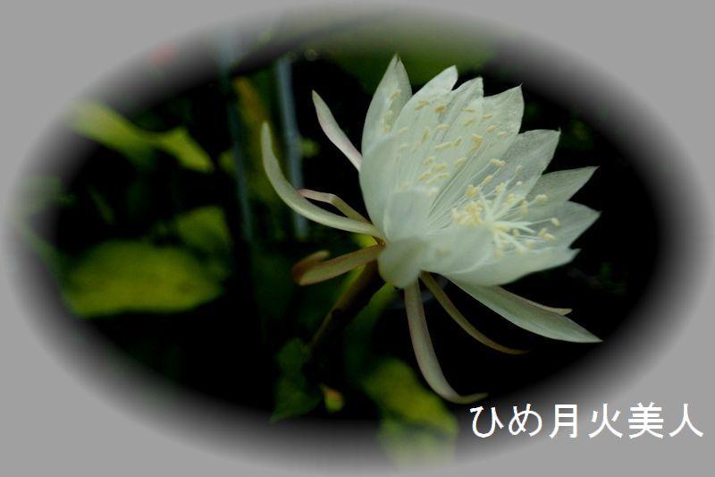 IMG_0727_R.jpg
