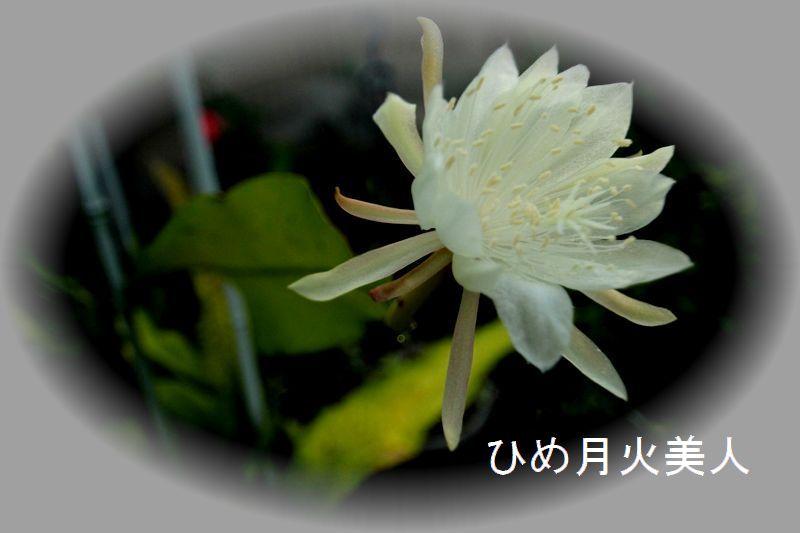 IMG_0728_R.jpg