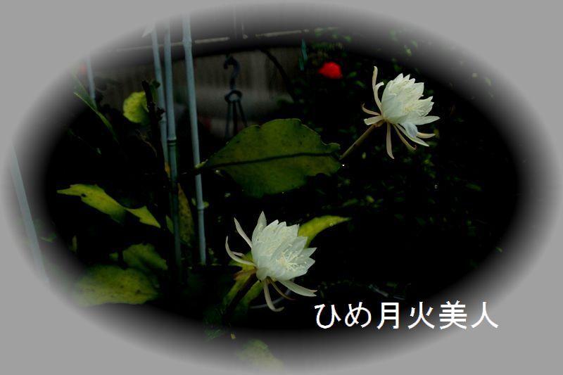 IMG_0729_R.jpg