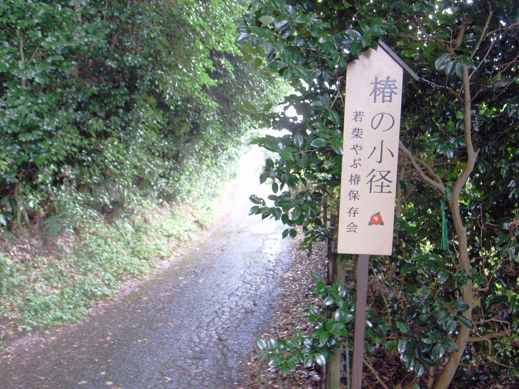 椿の小路4