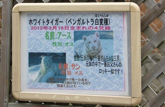 東武動物公園_31