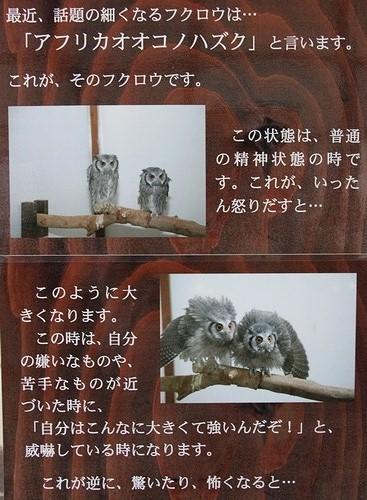 神戸花鳥園_3