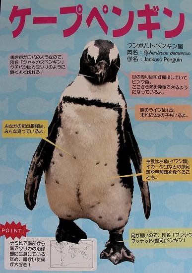 神戸花鳥園_6