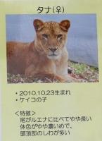 多摩動物公園_39