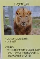 多摩動物公園_41
