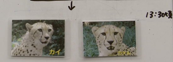 多摩動物公園_49