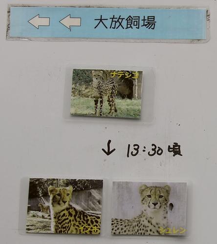 多摩動物公園_51
