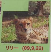 多摩動物公園_54