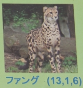 多摩動物公園_62