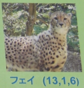 多摩動物公園_63