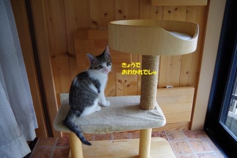 IMGP2276②