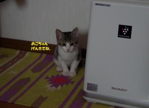 IMGP2311②