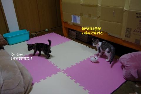 IMGP2414②