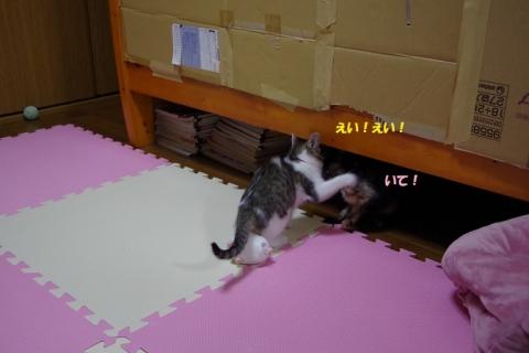 IMGP2426②