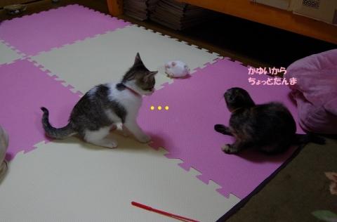 IMGP2427②