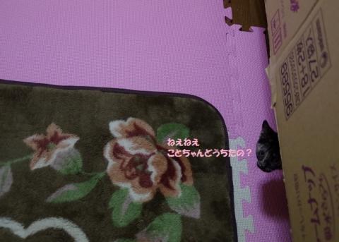 IMGP2439②
