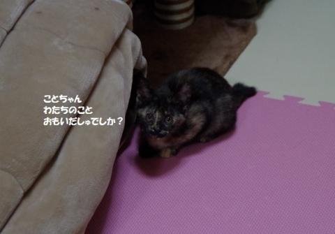 IMGP2449②