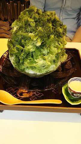 たすき抹茶 (1)