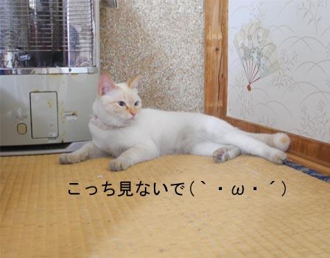 20165gatu24 001bro