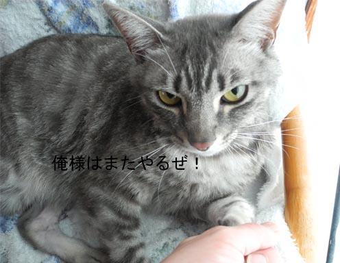 20166gatu6 003bro
