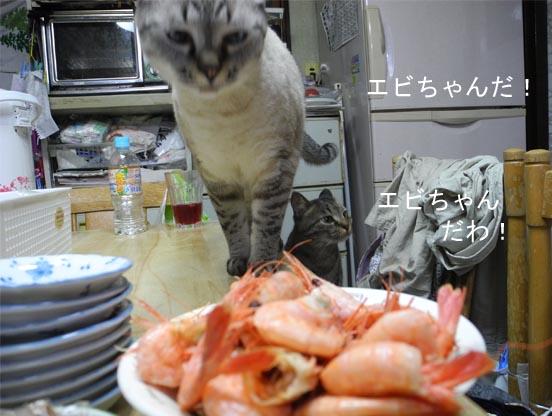 20166gatu7 001bro