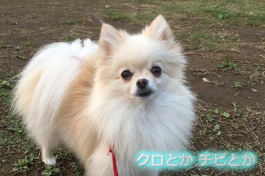 540px20160420_MiTo-01.jpg
