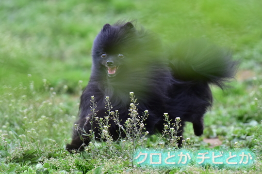 540px20160421_FUGA-06.jpg