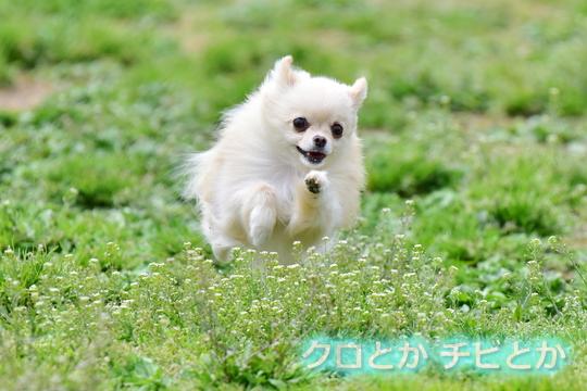 540px20160425_MiTo-02.jpg