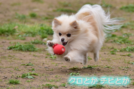 540px20160516_MiTo-01.jpg