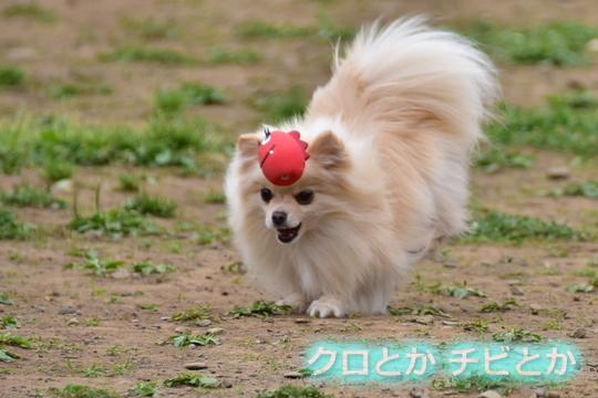 540px20160516_MiTo-02.jpg