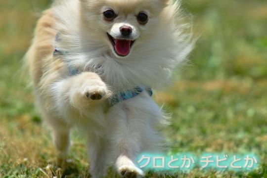 540px20160604_MiTo-01.jpg