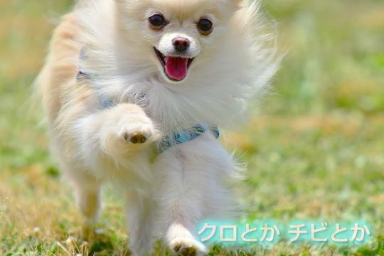 540px20160617_MiTo-01a.jpg