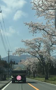 おぉ~桜まだ咲いてるね~