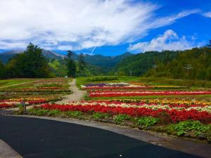 ロープウェイのお花畑