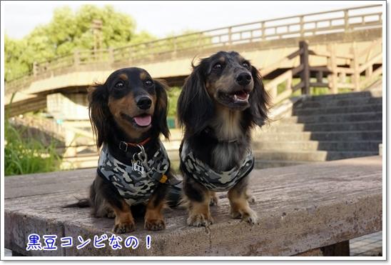20160827 伏見港公園_5418
