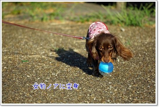 20160827 伏見港公園_5872