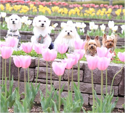 花壇で集合