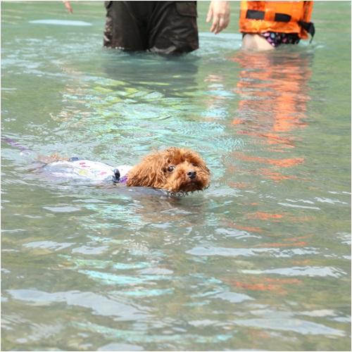 泳ぐルイズ