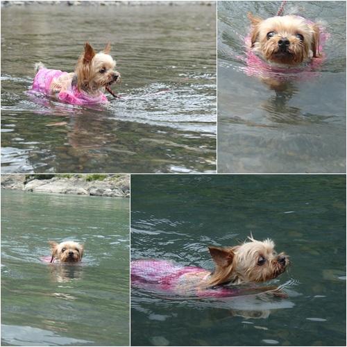 泳ぐくるみたん