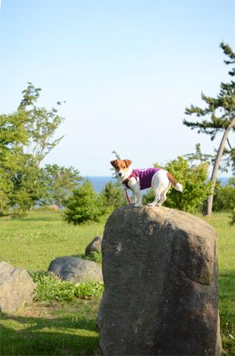 2016-06-10-福井キャンプ-146