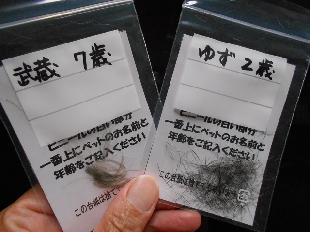 体毛アレルギー検査③