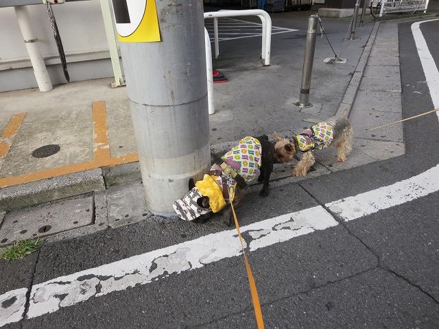 160807お散歩①