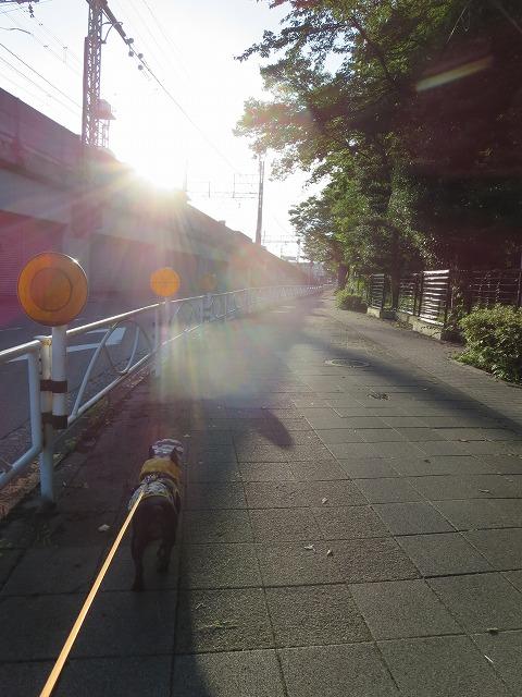 160807お散歩②